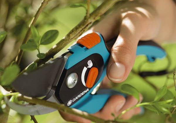 Секаторы садовые - как выбрать инструмент для обрезки садовых деревьев, какой секатор лучше, видео