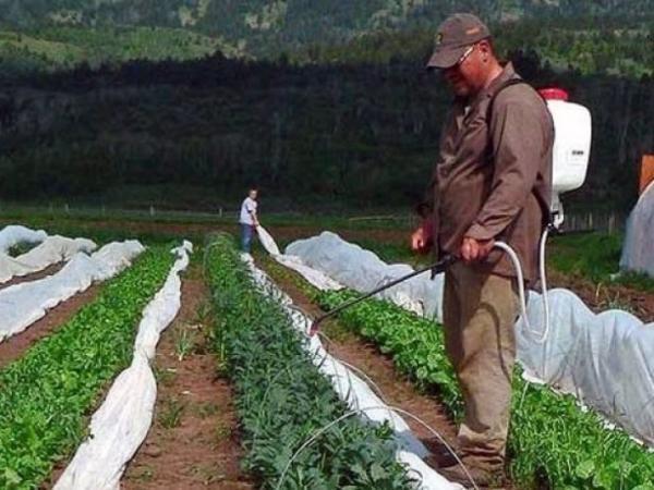 Опрыскивание растений от слизней