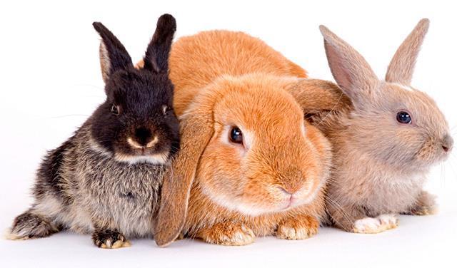 Вопросы-ответы по кроликам