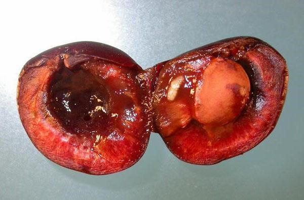 личинка мухи в ягоде