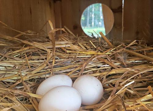 скрытое гнездо
