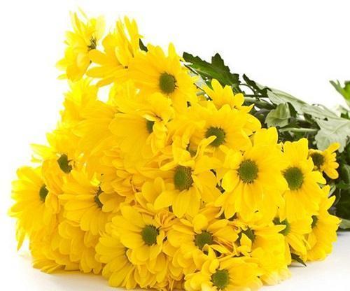 бакарди желтая