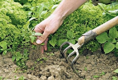 борьба с сорняками в августе