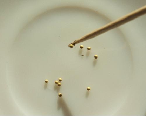 выкладка семян