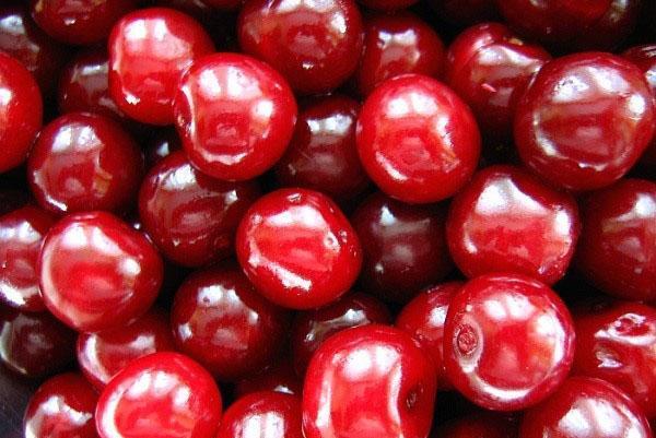 ягоды сорта харитоновская