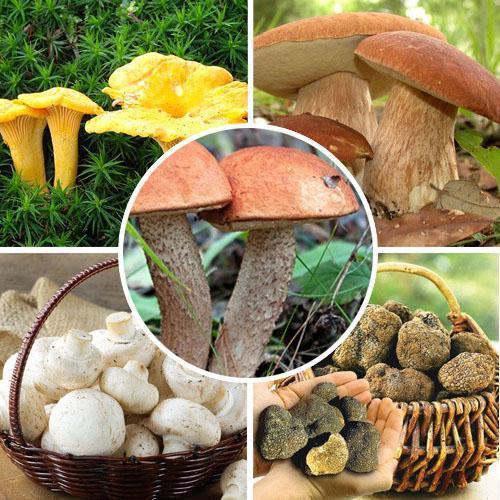 мицелий разных грибов