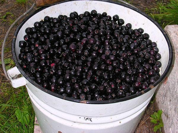 очищаем ягоды от веточек и листьев