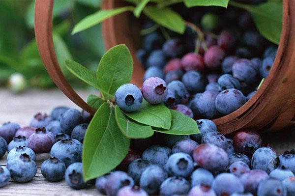 полезная и вкусная ягода