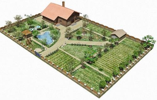 схема посадки огорода между деревьями