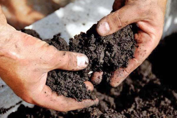 проверяем состав почвы