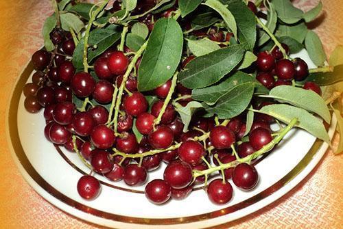 ягоды перебрать и помыть