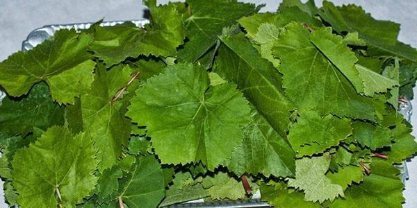 тщательно промыть листья