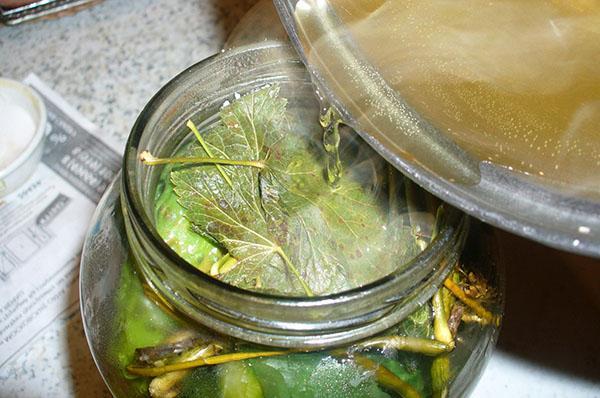 Рецепт огурцов в виноградных листьях на зиму