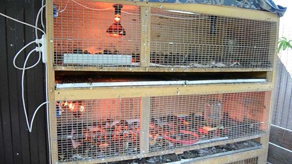 клетка брудер для маленьких цыплят