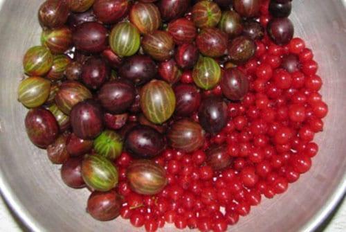 перебрать и помыть ягоды