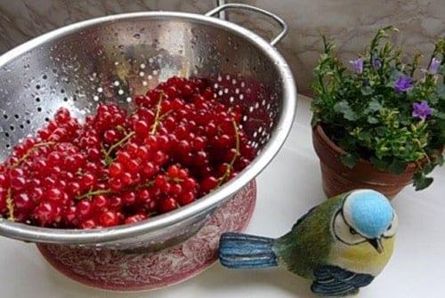 удалить плодоножки со смородины