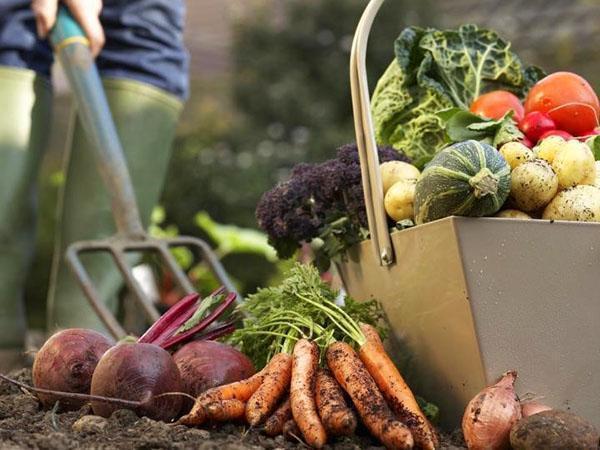 полезные и питательные овощи