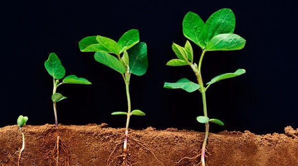 выращиваем только необходимые овощи