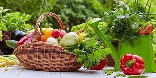 сбор урожая со своих грядок