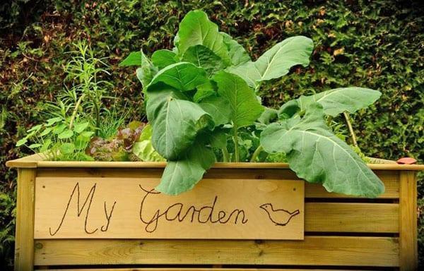 успешное развитие растений