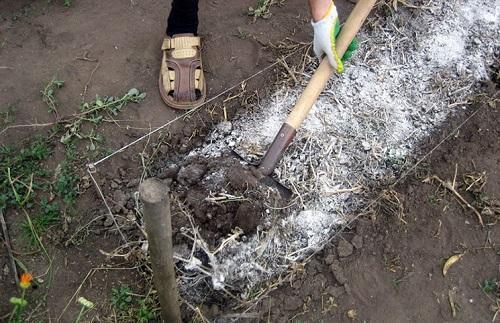 удобрение почвы
