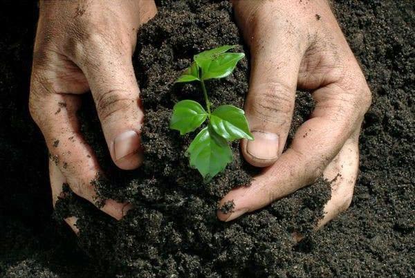 внесение в почву компоста
