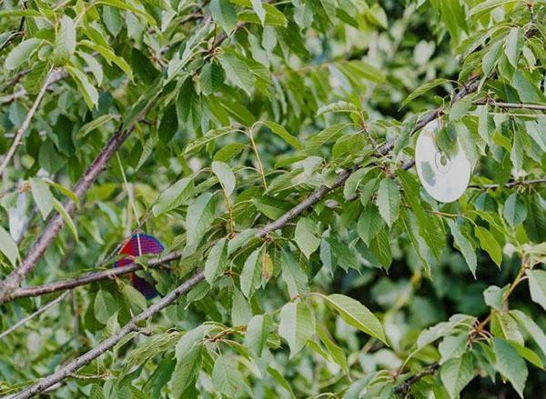диски против птиц