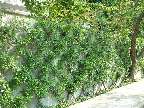 формирование дерева по стене