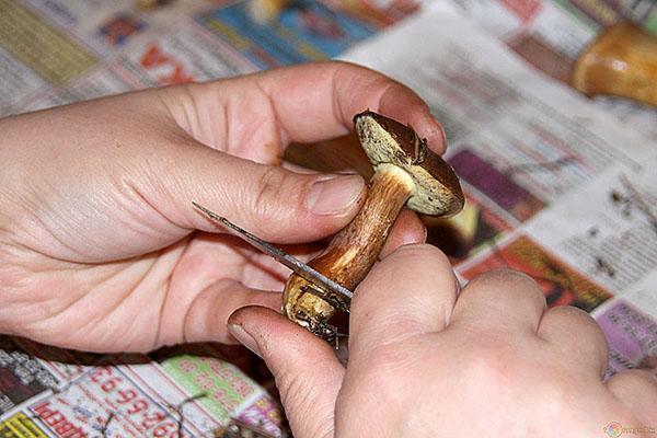Консервирование грибов на зиму