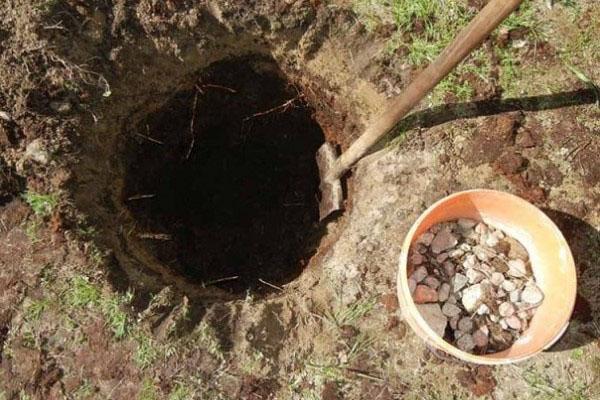 подготовка ямы для посадки груши