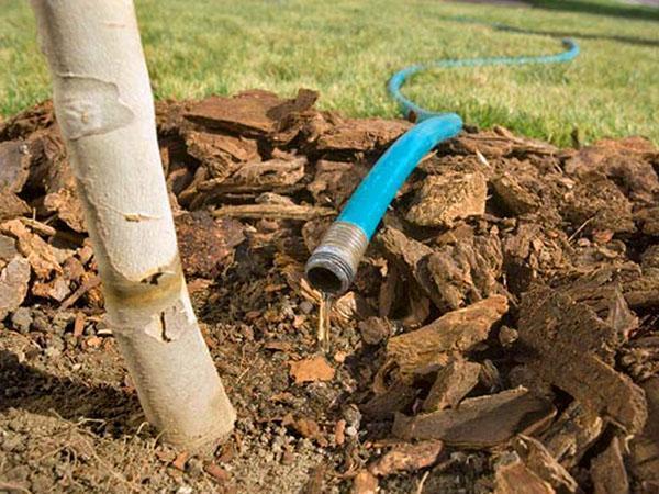 полив и рыхление почвы