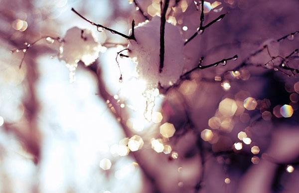 последний снег на деревьях