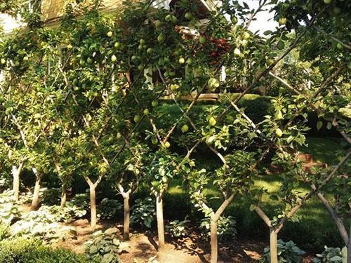 ряд деревьев с веерной кроной