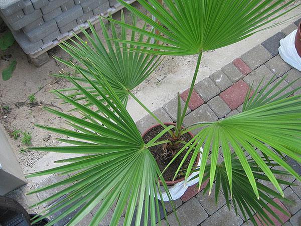 выращенное дома растение