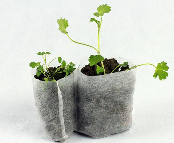 выращивание рассады в мешочках