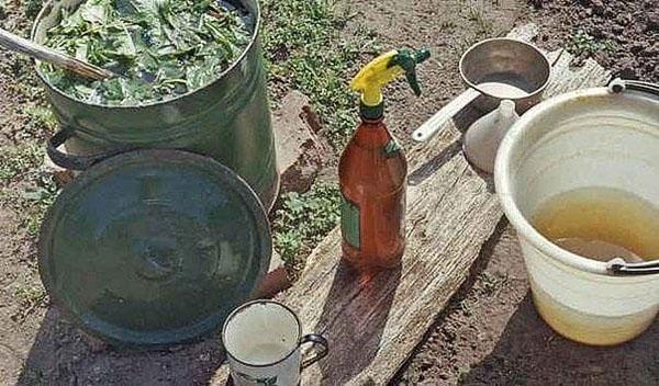 зеленый бульон для сливы
