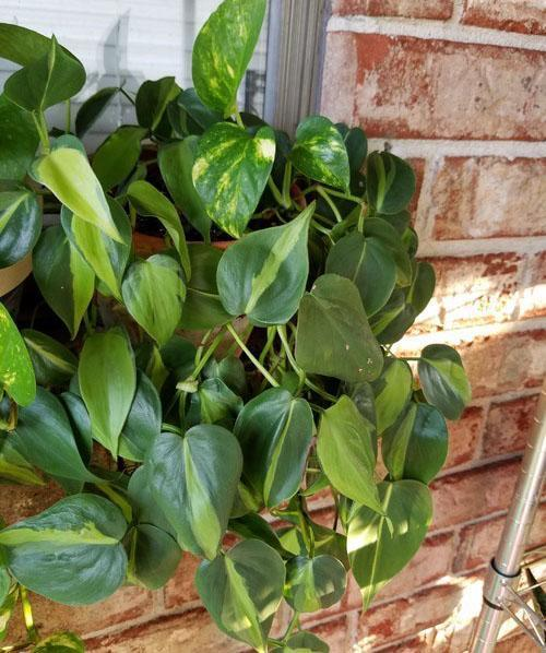 хорошо развитое растение