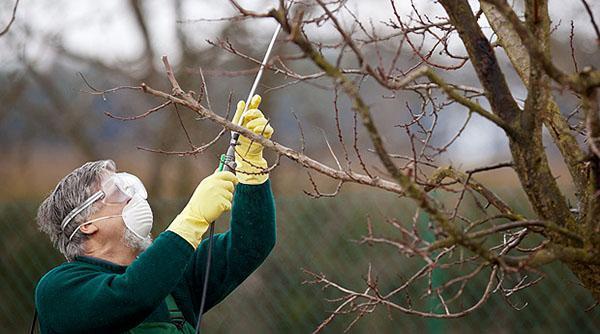опрыскивание деревьев и кустов
