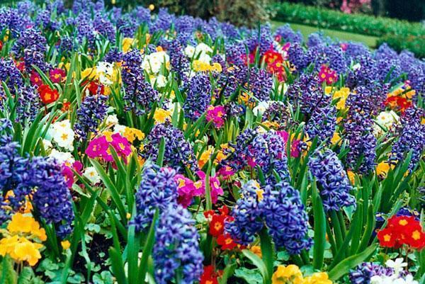 Ландшафтный дизайн туи и цветы
