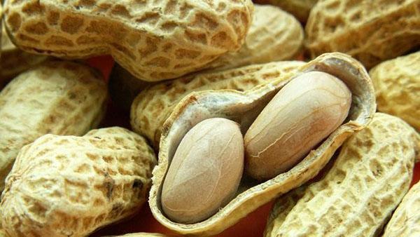 плоды арахиса в стручке