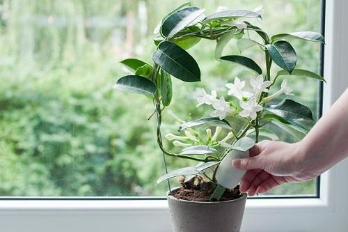 удобрение с азотом фосфором и калием для комнатных растений