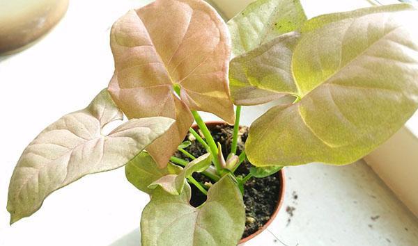 посадка в один горшок нескольких растений