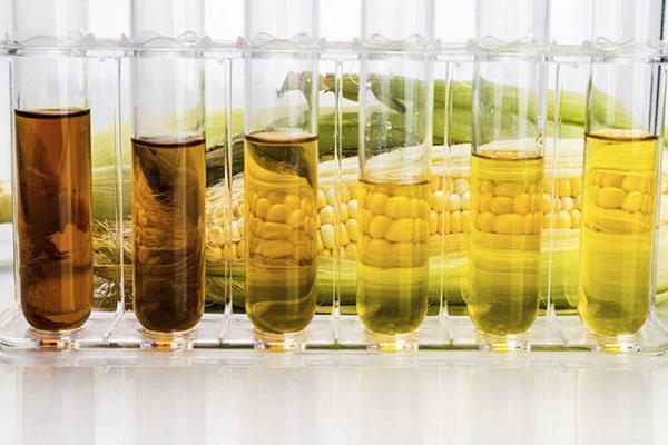 типы кукурузного масла