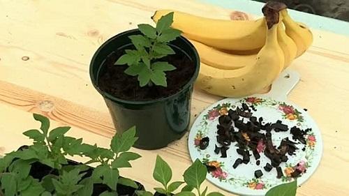 Настойка для цветов из банановой кожуры