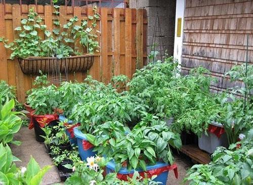 выращивание растений в контейнерах