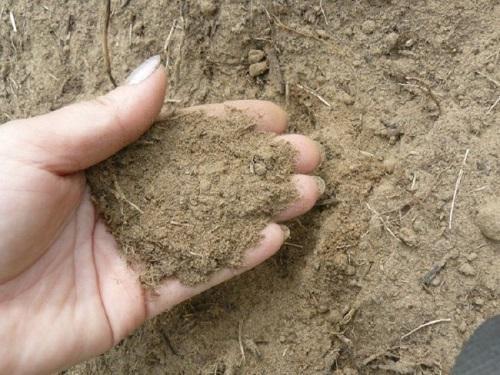 Песчаная почва-чем удобрять
