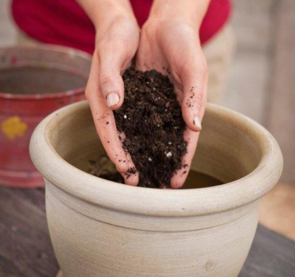 подготовка грунта для посадки авокадо