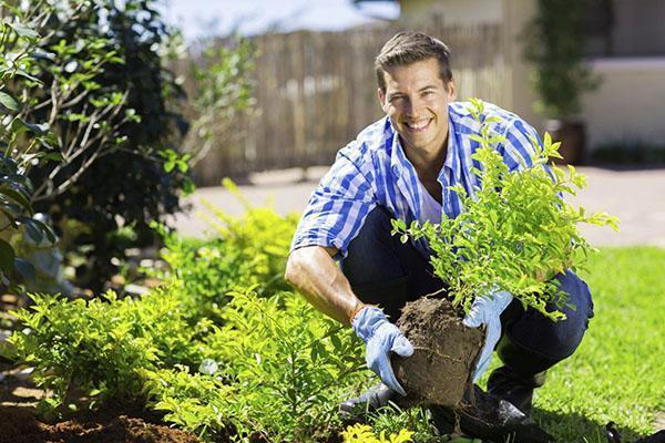 посадка садовых культур