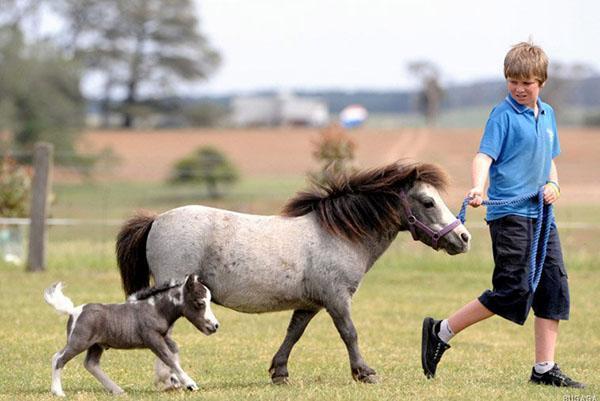 семейство маленьких лошадей