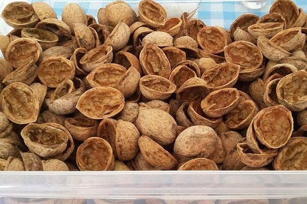 Скорлупа грецкого ореха - лечебные свойства, применение отвара и настойки от зубного камня, видео